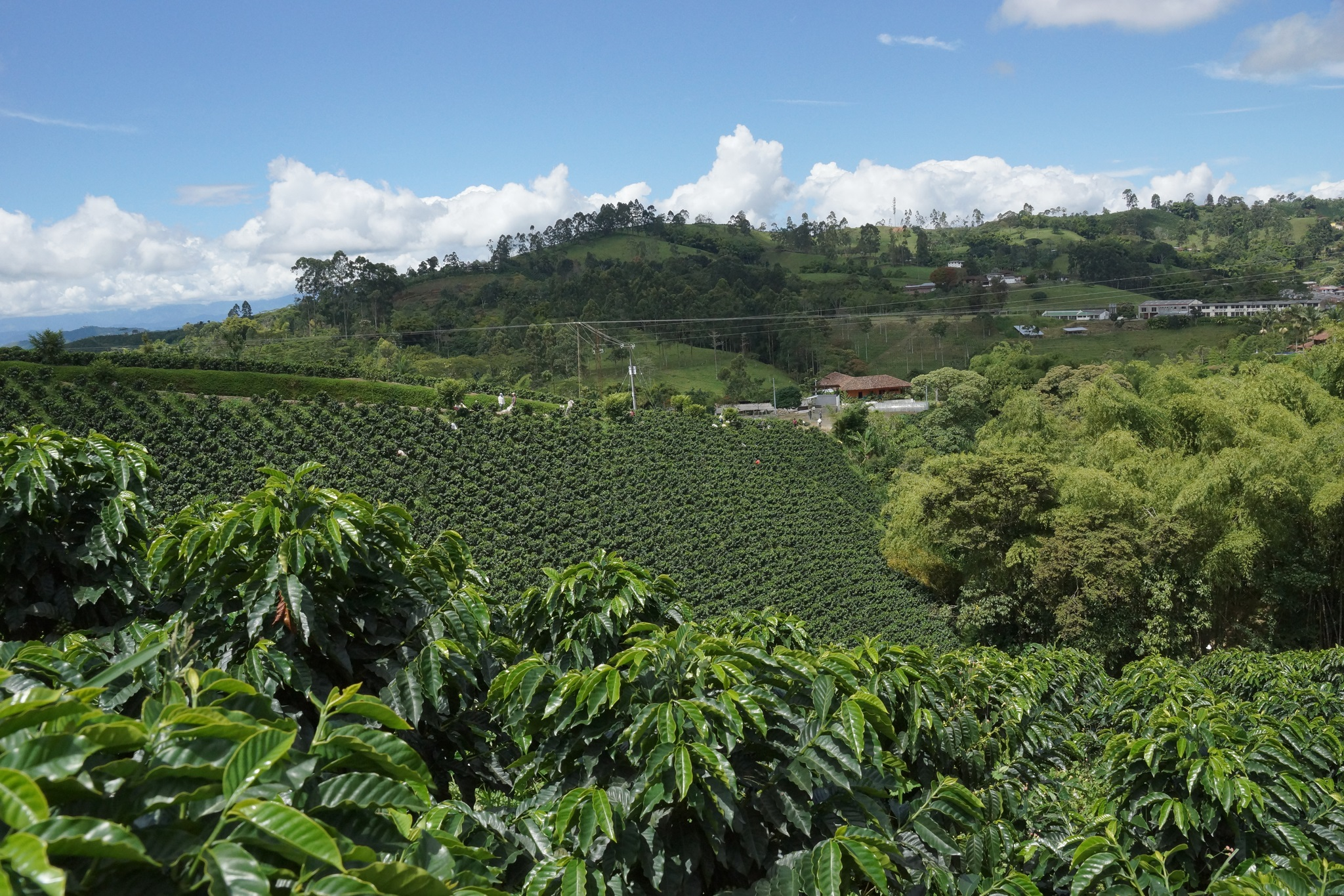 100% Colombian coffee grown in high mountains